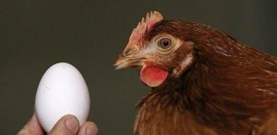 América Latina: la gallina y el huevo